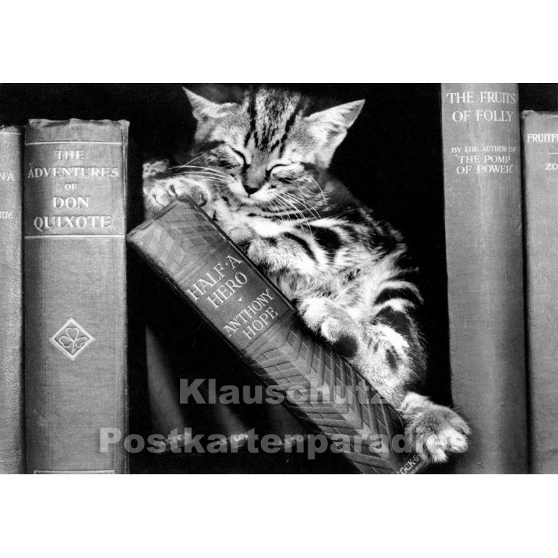 Fotokarte s/w  - Katze schläft im Bücherregal