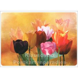 Tulpenvielfalt - SkoKo Blumen Postkarte