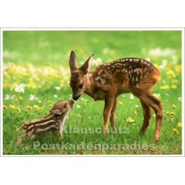 Freundschaft - Reh und junges Wildschwein | SkoKo Tier Postkarte