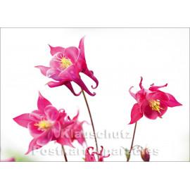 Akelei - Blumen Postkarte vom Postkartenparadies