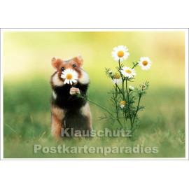 Lustige SkoKo Tier Postkarte | Durch die Blume