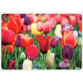 SkoKo Blumen Postkarte mit Tulpenfeld