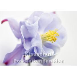 Akelei Blüte blau / lila - Fotokarte vom Postkartenparadies