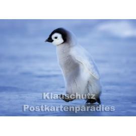 Postkartenparadies Postkarte | Kleiner Pinguin