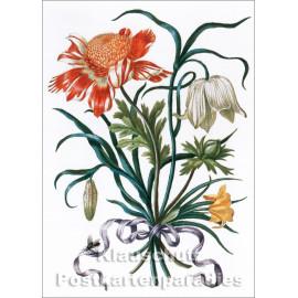 Taurus Kunst Postkarte   Maria Sibylla Merian   Neues Blumenbuch (1680)