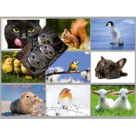 Postkarten Sparset vom Postkartenparadies mit 10 Karten - Tiere 1