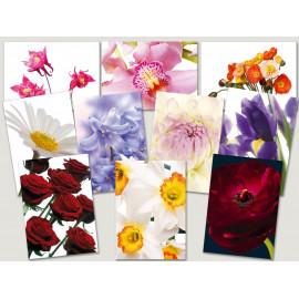 Postkarten Sparset vom Postkartenparadies mit 10 Karten - Blumen 2