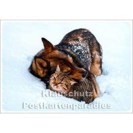 Katze und Hund im Schnee - SkoKo Winter Weihnachtskarte