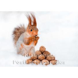 Postkartenparadies Winter Postkarte: Eichhörnchen mit Nüssen im Schnee