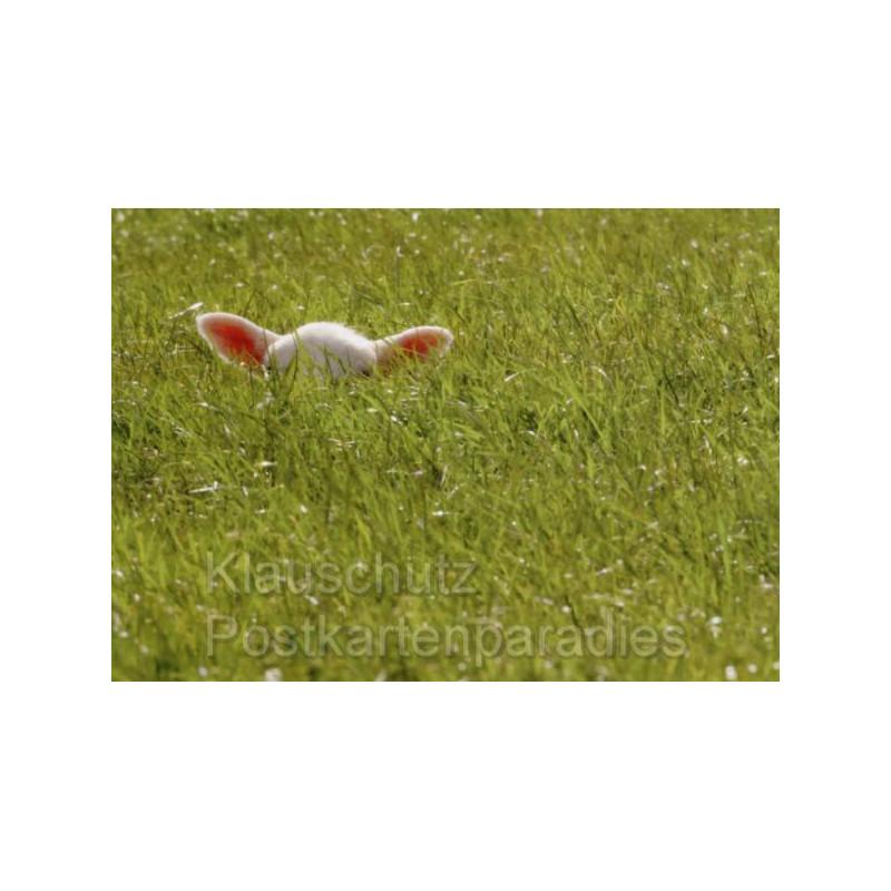 Lamm versteckt sich auf einer Wiese - Osterkarte Postkarte